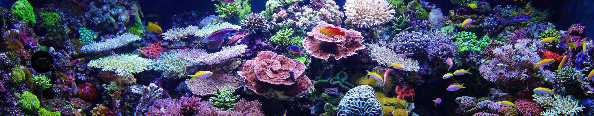 meerwasser aquarium aquaristik center ost aquariumbauer m nchen korallen. Black Bedroom Furniture Sets. Home Design Ideas