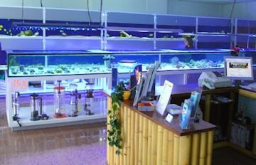 Aquarium aquaristik center ost gmbh aquariumbau m nchen for Meerwasser aquaristik shop