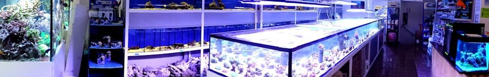 ACO_Meerwasserabteilung