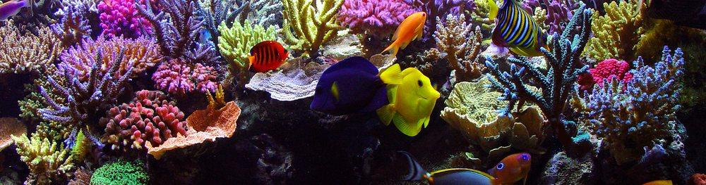 ACO_Meerwasserfische5