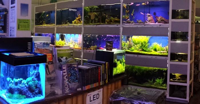 verkaufs schauaquarien aquarium aquaristik center ost. Black Bedroom Furniture Sets. Home Design Ideas