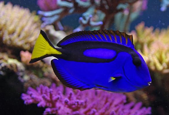 Meerwasser aquarium aquaristik center ost aquariumbauer for Fisher fish chicken indianapolis in