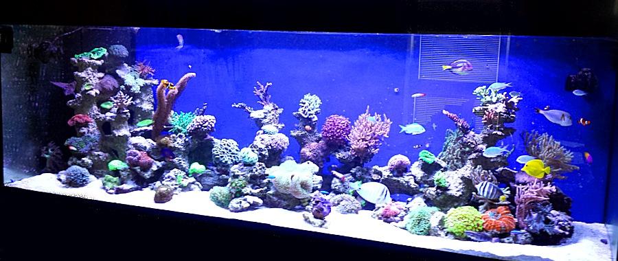 Referenzen meerwasser aquarium aquaristik center ost for Salzwasser aquarium