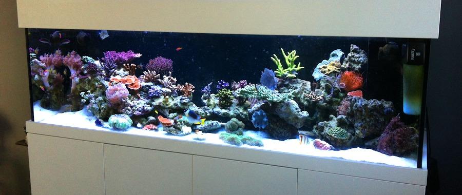 referenzen meerwasser aquarium aquaristik center ost. Black Bedroom Furniture Sets. Home Design Ideas