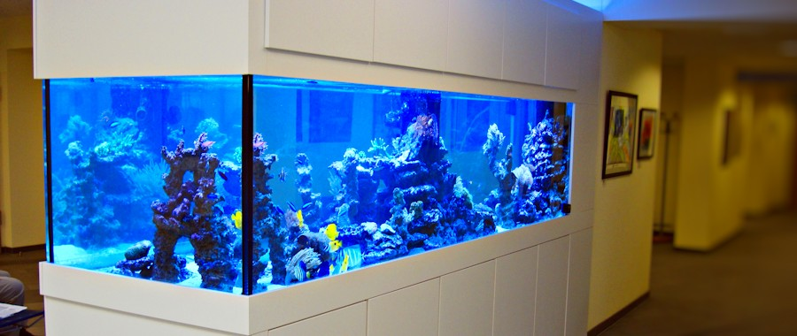 referenzen meerwasser aquarium aquaristik center ost gmbh aquariumbau m nchen meerwasser s wasser. Black Bedroom Furniture Sets. Home Design Ideas